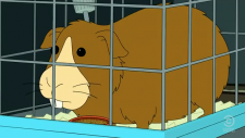 Fry's guinea pig.png